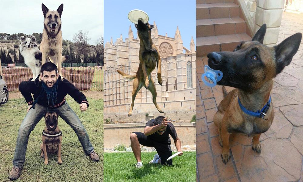 Habilidades con tu perro