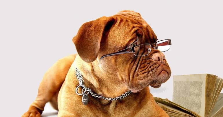 Teoría actual de perros